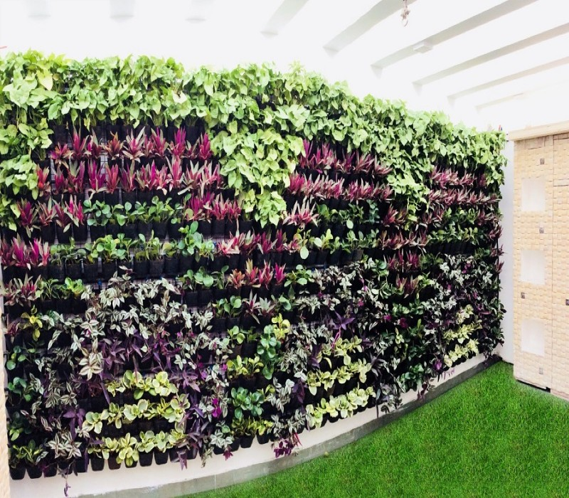 Green walls, Garden wall